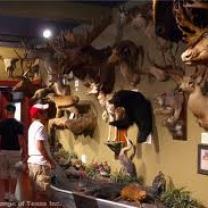 Buckhorn and Longhorn Museum